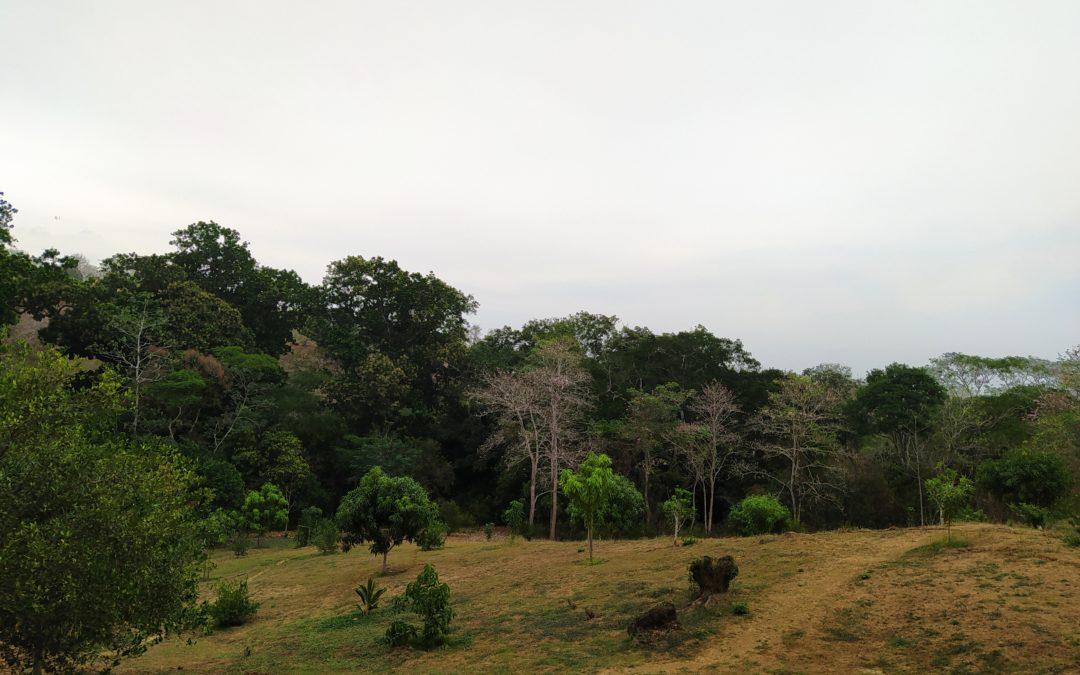 La abundancia del bosque seco tropical